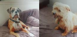 Lulu&Biscuit