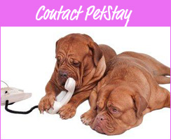 Contact PetStay for Home Dog Boarding Services
