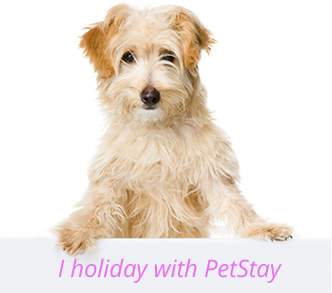 Home Dog Boarding at PetStay