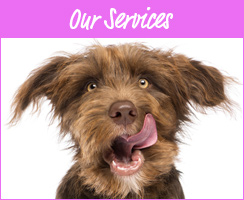 Our Dogsitting Services