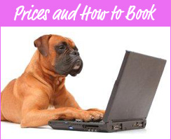 Prices & How to Book our Dogsitting Services