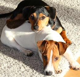 Bella and Lola