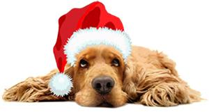 PetStay Home Dog Boarding