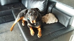 East Lancs-Ruby