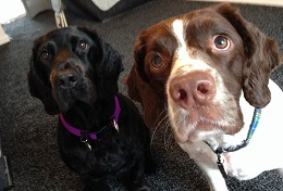 PetStay Glasgow - Charlie&Murphy