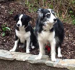 Glasgow-Rosie&Molly