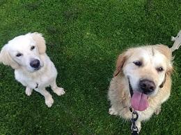 Archie & Todd