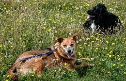 Guildford-Oscar&Claudie