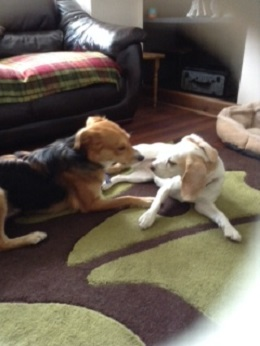 Ollie&Bella