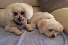 Hull -Cassie&Bobby