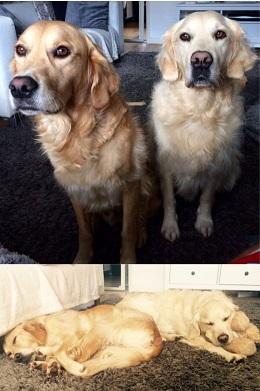 Leics-Cooper&Milo