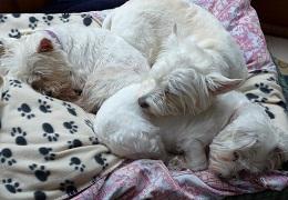 Polo, Rosie & Lola