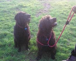 Dixie&Maisie