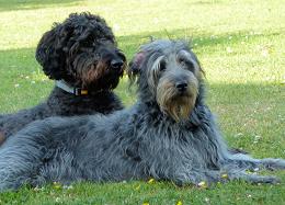 Lettie & Oscar