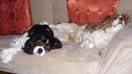 Marley & Paddy