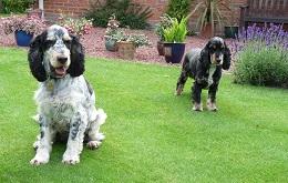 Wakefield-Rufus&Miliie