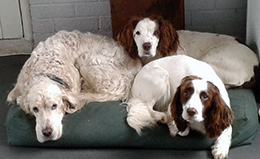 Winnie (left, with carers two dogs)
