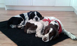 Gertie & Wilbur