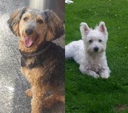 Herefordshire-Bailey&Oscar