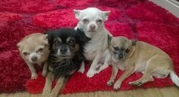 Herefordshire-Jazzy,Gemma,Lizzy&LuLu