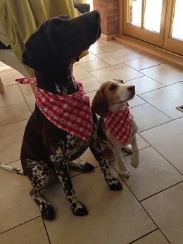 Bailey&Bella
