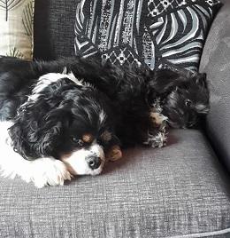 Derby-Ellie&Betty