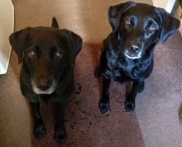 Derby-Ruby & Sammy