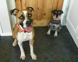 Cheshire-Trev&Daisy