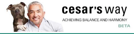 Cheshire cesar