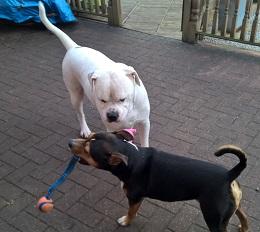 Chester&Vito