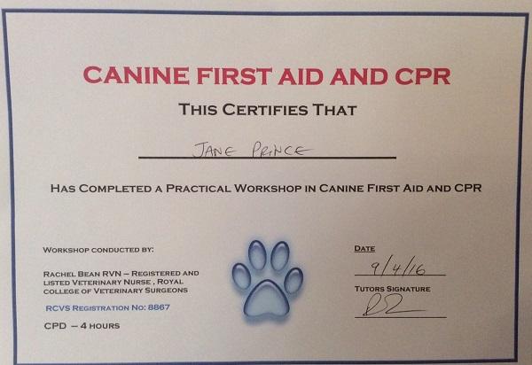 Staff-Dog First Aid