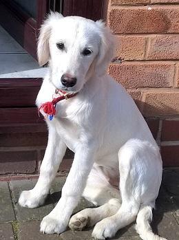 Staffordshire-Maisie