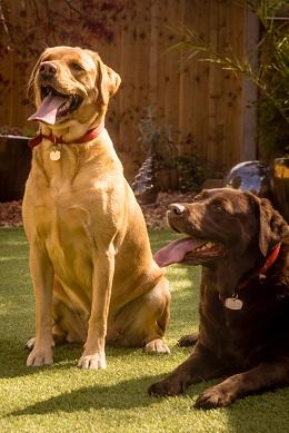 Staffordshire-Maisie&Poppy