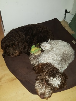 Warwickshire-Bruno&Ruby