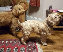 Dorset-Teddy&Ernie