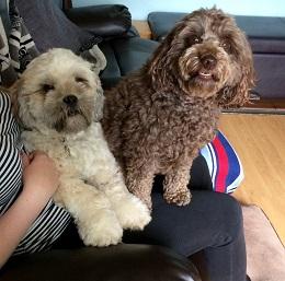 Derby-Ruby&Zeus