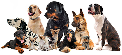 Dog sitting services in Warwickshire