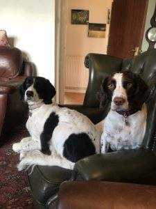 Alfie and Molly