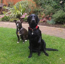 Daisy and Tilly