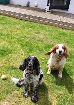 Dorset-Stephen and Rocky