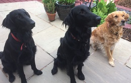 East Lancs-Homer, Bruno & Alfie