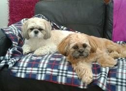 Glasgow-Lola&Ted