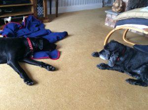Jasper & Alfie