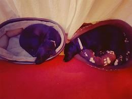 Leics-Roxy & Poppy