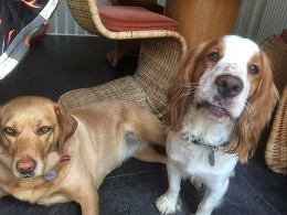 Leics-Lola&Monty