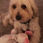 Mia at PetStay