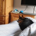 Milo at PetStay York