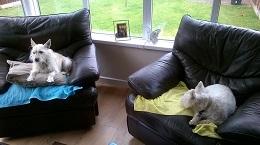 Newcastle-Ollie&Oscar