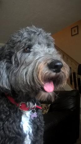 Home Dog Boarding - Newcastle upon Tyne, North Tyneside