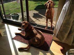 Norfolk-Chase&Rufus